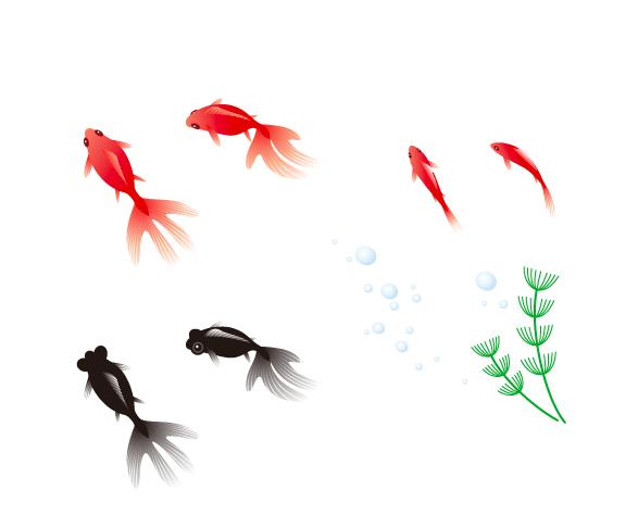 金魚 姉金と黒出目金 商用利用できるフリー素材サイト ハコハコ マテリアル
